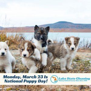 jpeg puppy day reach